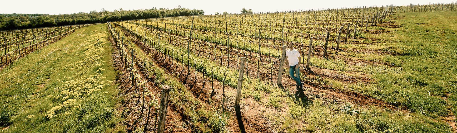 vrhunsko-istarsko-vino
